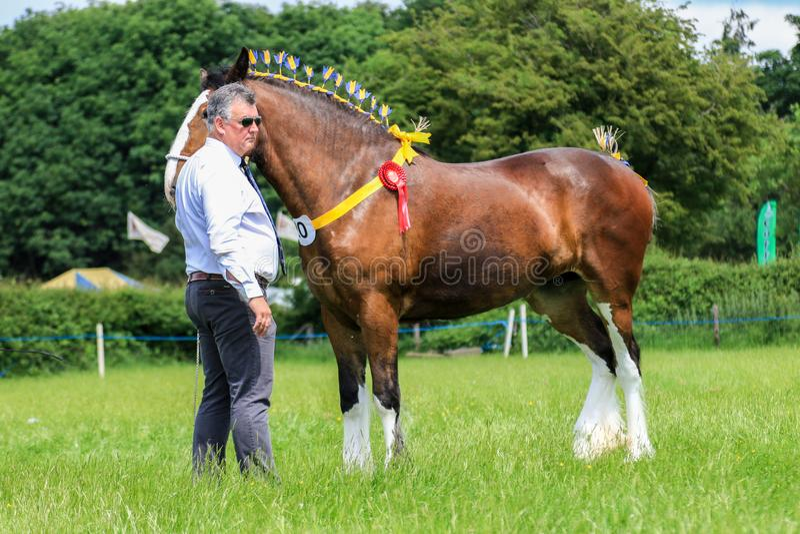 Konkurent pokazuje jego konia przy przedstawieniem obrazy stock