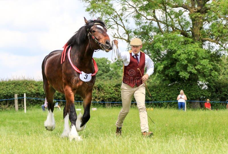 Konkurent pokazuje jego konia przy przedstawieniem fotografia royalty free