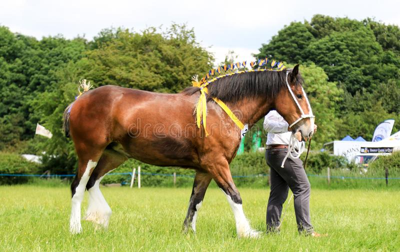 Konkurent pokazuje jego konia przy przedstawieniem zdjęcie stock