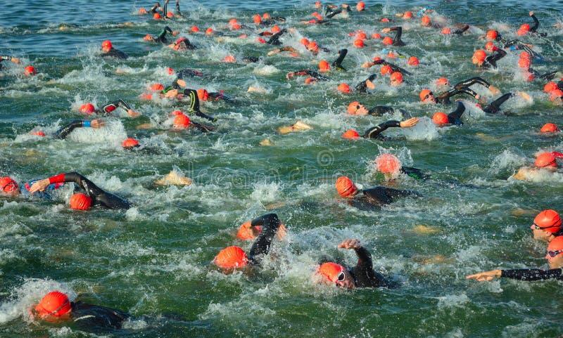 Konkurrenten im Wasser, welches das Schwimmenstadium von Triathlon beginnt, stockbilder