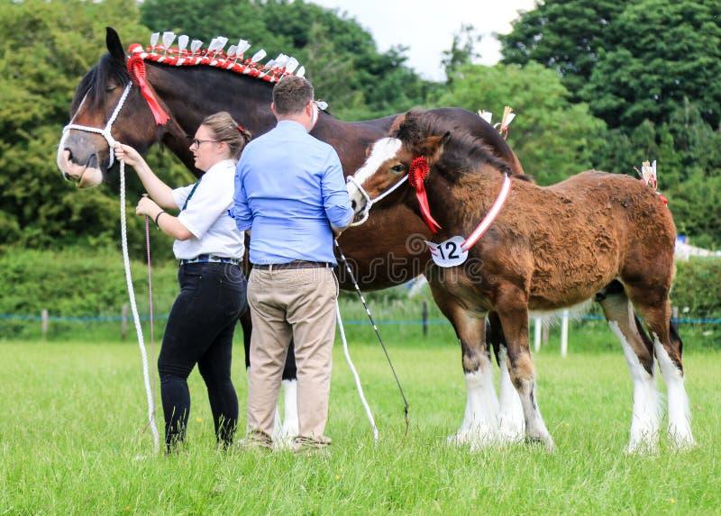 konkurrenter som visar deras hästar på en show royaltyfri fotografi