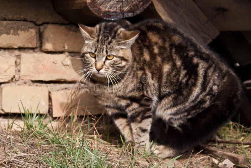 Konkurrenzfähige Katze stockbilder