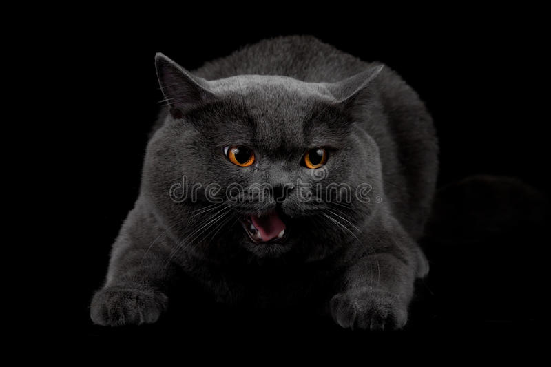 Konkurrenzfähige schwarze Katze im dunklen Raum lizenzfreie stockfotos