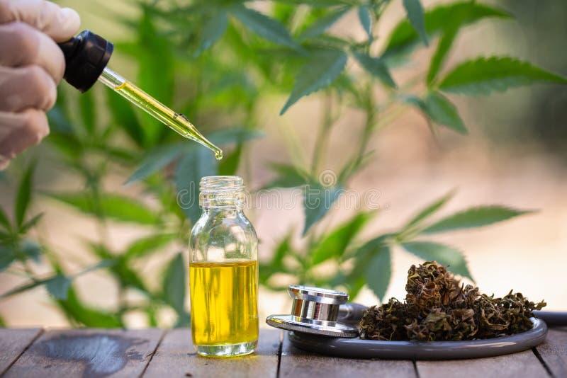 Konopiany olej, Medyczni marihuana produkty wliczając marihuana liścia, suszący pączek, cbd i hash, oliwimy nad czarnym drewniany obrazy royalty free