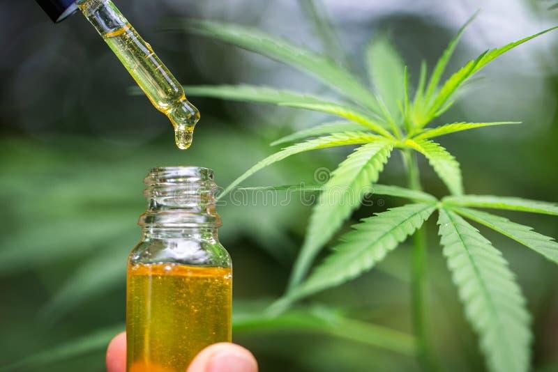Konopiany olej, Medyczni marihuana produkty wliczaj?c marihuana li?cia, susz?cy p?czek, cbd i hash, oliwimy nad czarnym drewniany zdjęcia stock