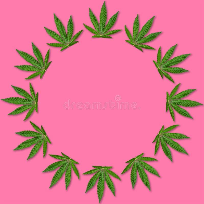 Konopie lub marihuany liścia obrazka rama zdjęcie stock