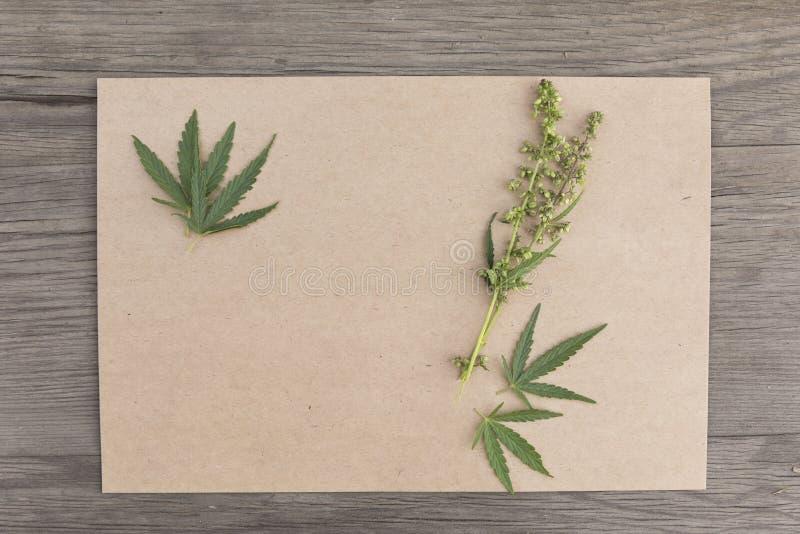 Konopie opuszcza i kwitnie z rzemiosło pustym papierem na starego grunge drewnianym tle Odgórny widok Minimalistic mockup zdjęcia royalty free
