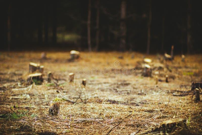 Konopie w polanie w lesie obrazy stock