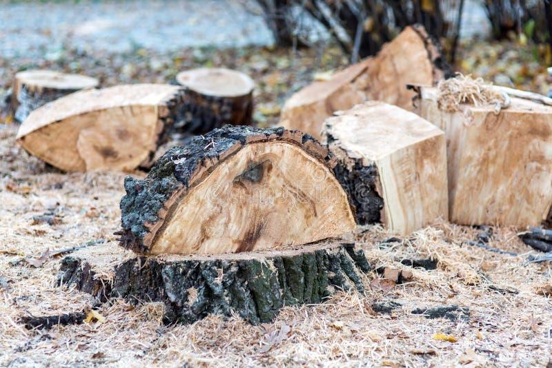 Konsekwencje ciąć starego drewno zdjęcia royalty free