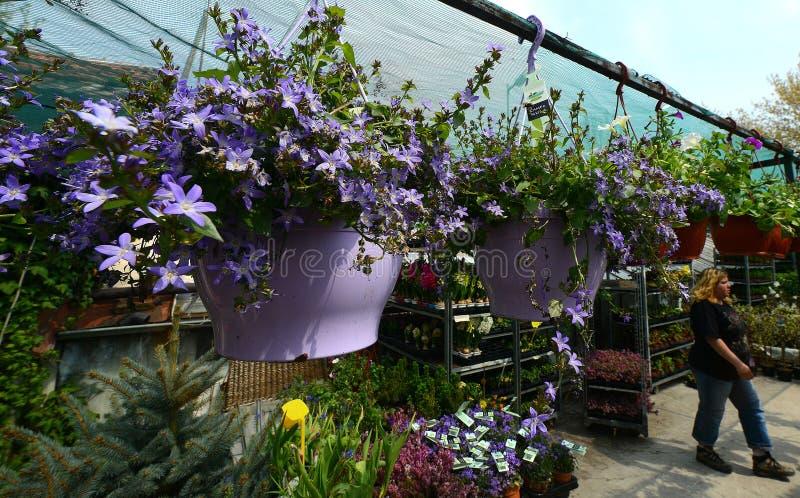 Konservatorium von Blumen stockfotos