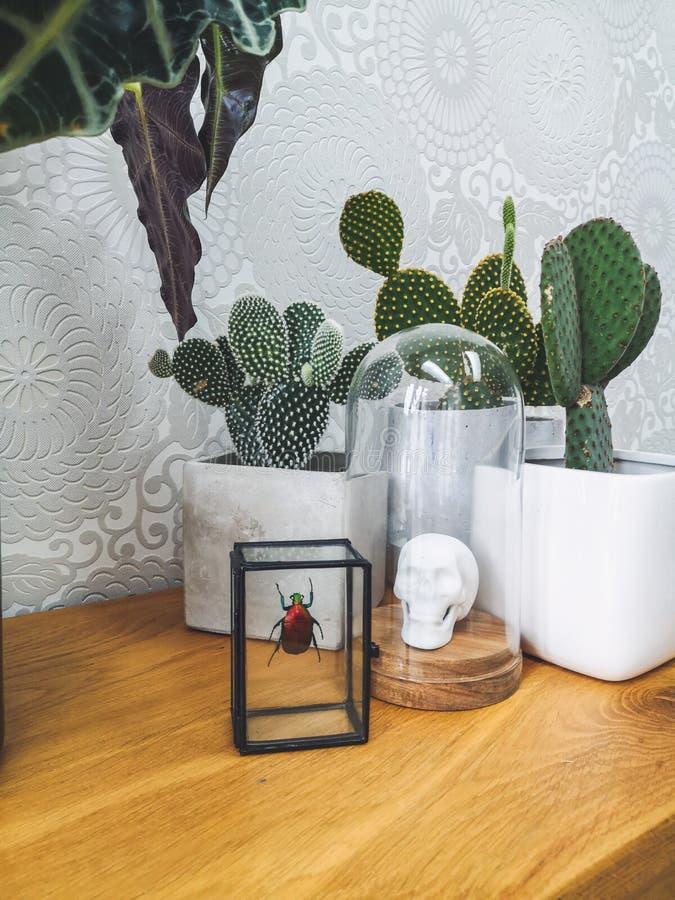 Konservierter bunter Käfer, Porzellantierkopf in einer Glasglasglocke und Kaktuspflanzen, die einen städtischen Dschungel herstel lizenzfreie stockbilder