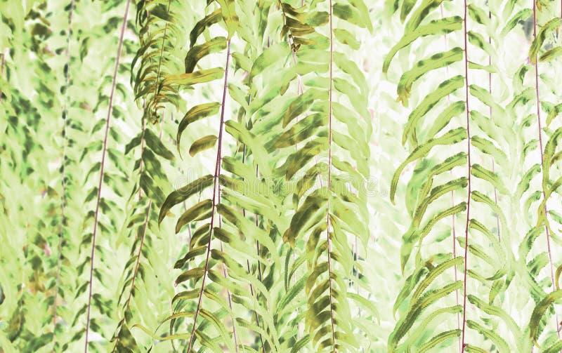 Konst av den härliga gröna ormbunken lämnar bruk för abstrakt bild royaltyfri foto