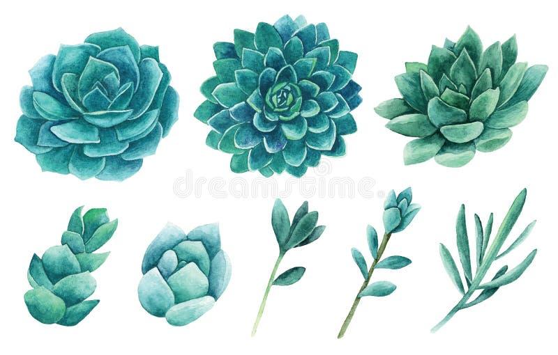 Konst för gem för vattenfärgsuckulentvektor Grön kaktusclipart royaltyfri illustrationer