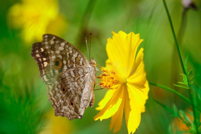 Konst för natur för fjärils- och blommacloseupdetalj arkivfoton