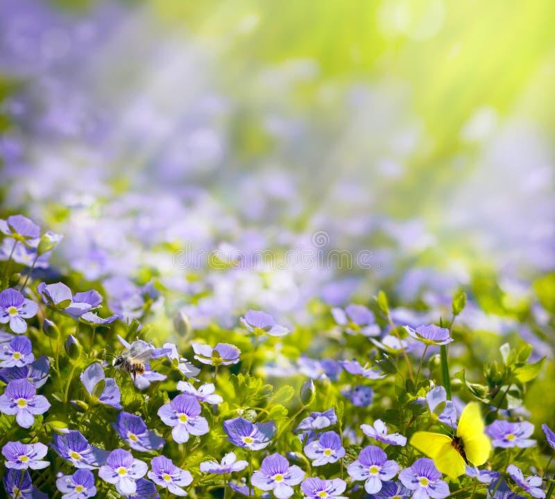 Konst fjädrar wild blommor i solljusbakgrunden royaltyfri bild
