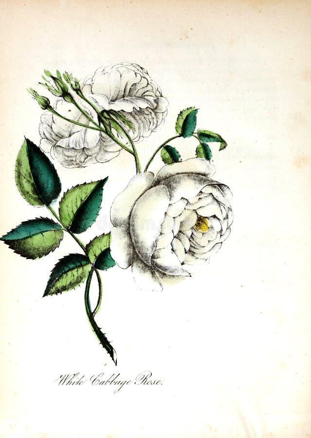 Konstbild white för bakgrundsfingeravtryckillustration royaltyfri illustrationer