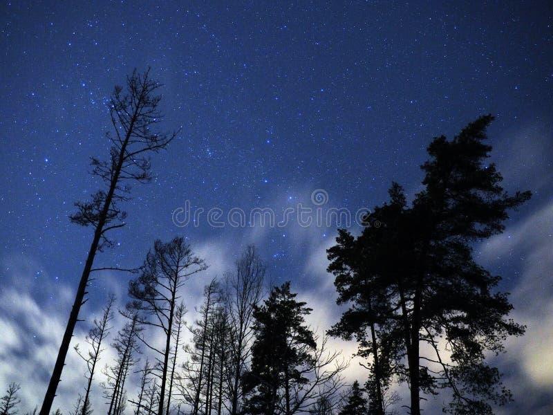 Konstellationer för Cassiopeia för stjärnor för natthimmel över vinterskog royaltyfri foto