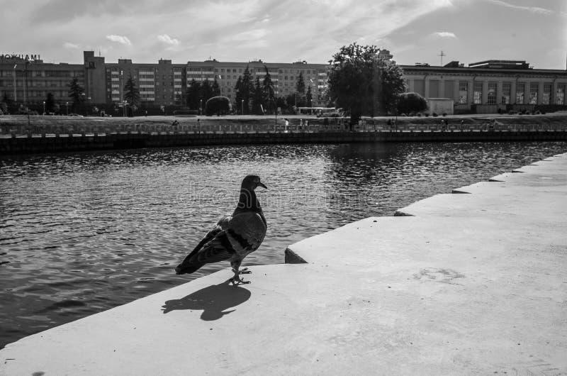 Konstfotografi: cityscape av den svartvita upplagan för Minsk stad i motsats _ Gammal filmeffekt royaltyfria bilder