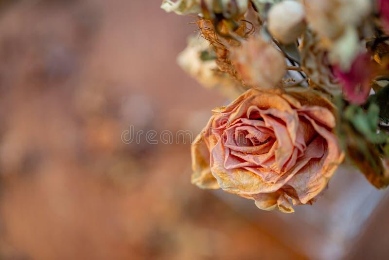 Konstfotografi Vissnade rosor Urblekta rosor och torrt gr?s arkivbilder