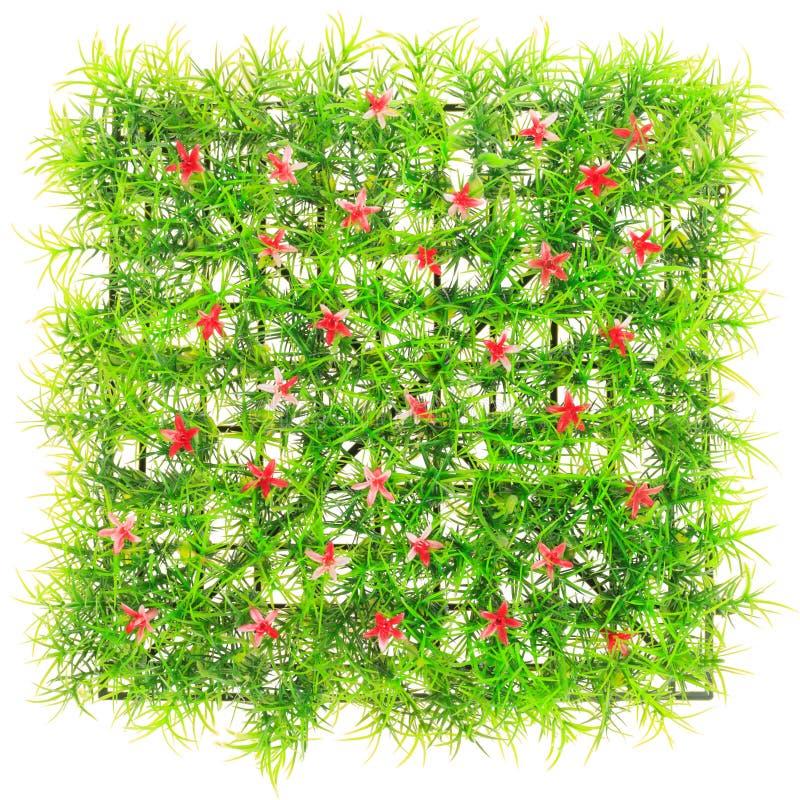 Konstgjord grasso royaltyfri bild