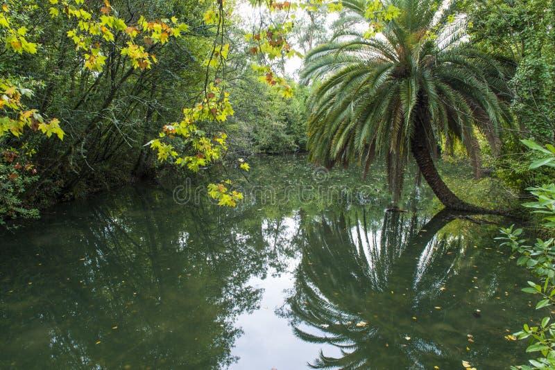 Konstgjord sjö i Curia i Portugal arkivbilder