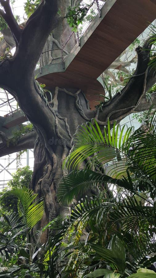 Konstgjord trädstruktur, trägångbana royaltyfri foto