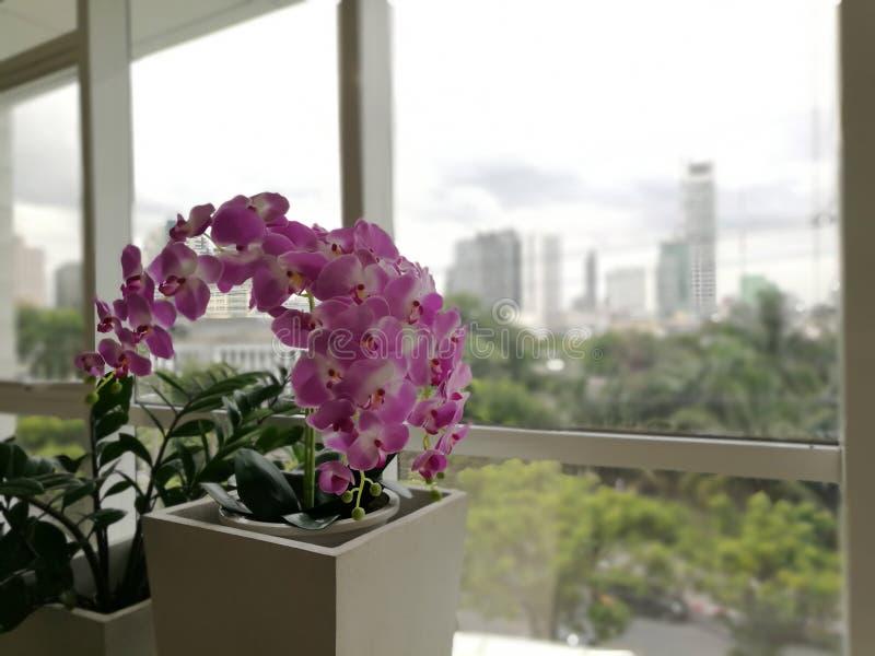 Konstgjorda blommor Purpurfärgade orkidér, violetta orkidér Orkidén är qu royaltyfri bild