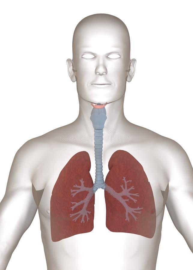 Konstgjort tecken med täta lungs - stock illustrationer