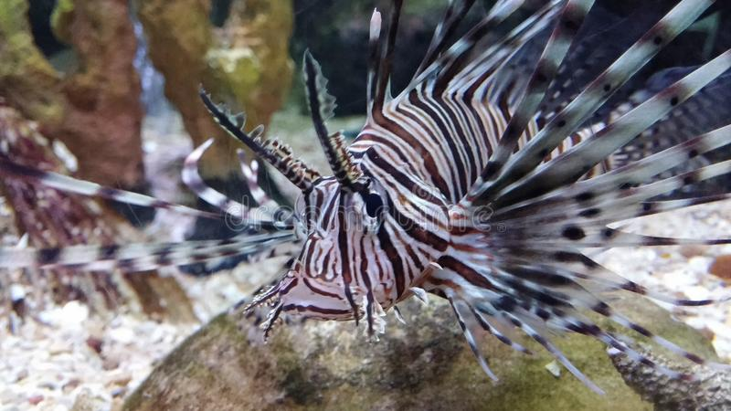 Konstig fisk i akvarium royaltyfria foton