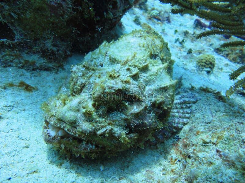 Konstig fisk på havsbottnen arkivfoton