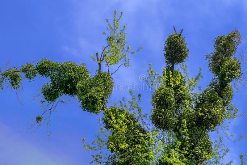 Konstigt gammalt träd på blå molnig himmel arkivfoto