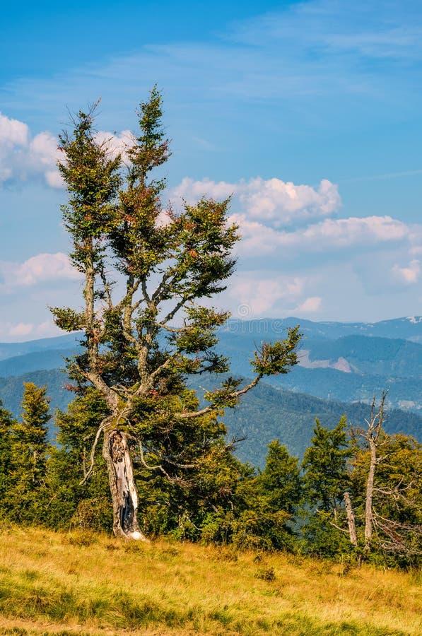 Konstigt träd på en backe royaltyfria foton