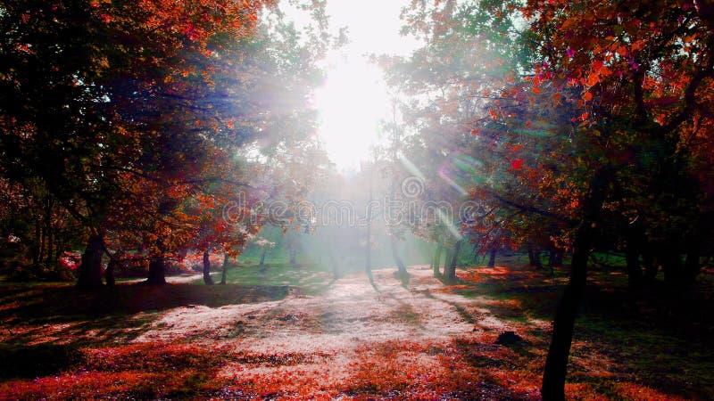 Konstnärlig morgonsolljusversion 2 arkivbilder