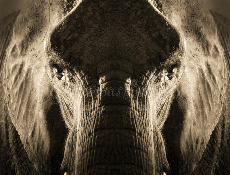 Konstnärlig symmetrisk elefantstående i Sepia Tone With Dramatic Backlighting arkivbild