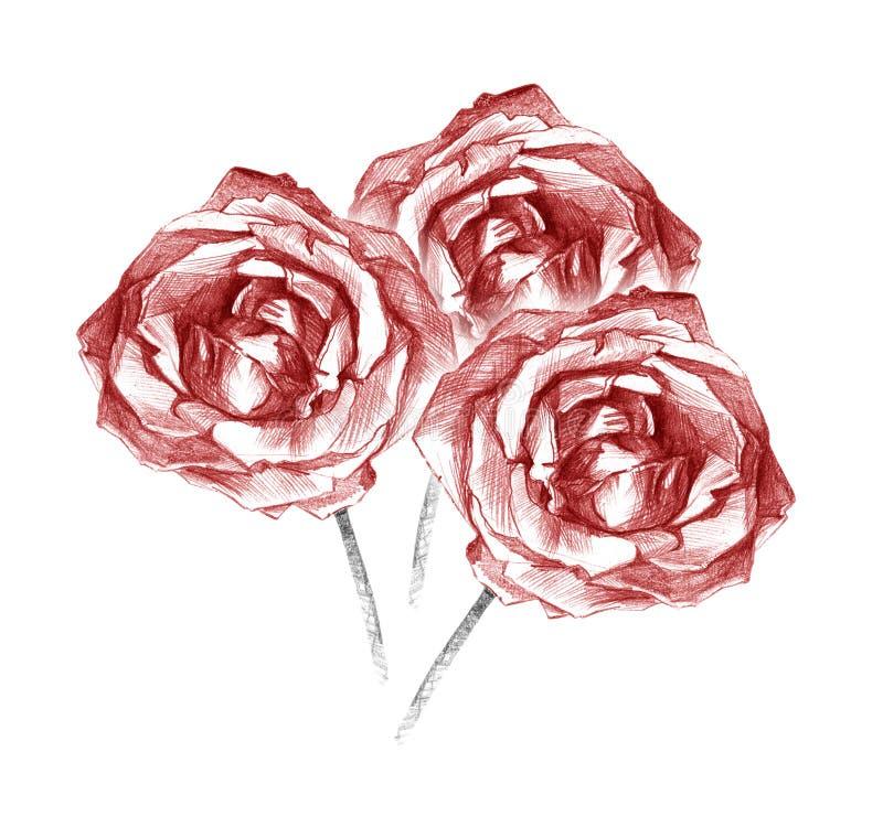 Konstnärlig teckning för härligt bukettkol för tre röda rosor royaltyfri illustrationer