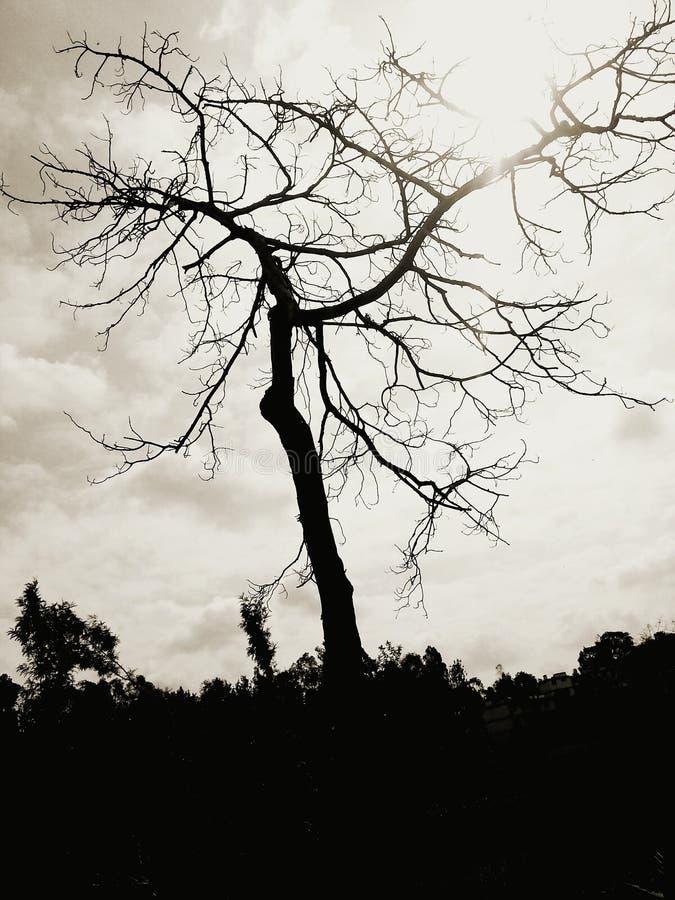 konstnärlig tree arkivfoto