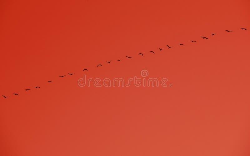 Konstnärligt foto av flygfåglar i orange bakgrund Solnedgång- och flygfåglar royaltyfria bilder
