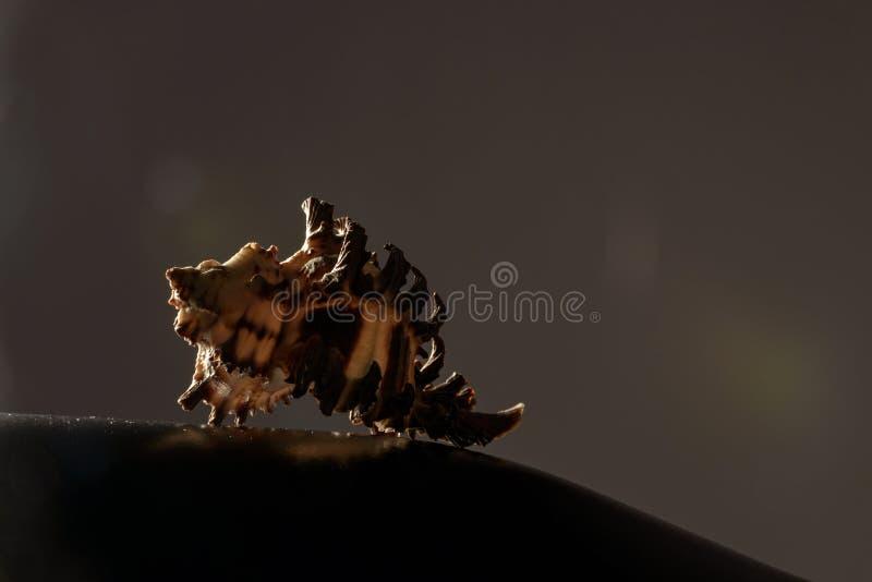 Konstnärligt havsskalfotografi på mörk bakgrund royaltyfria foton