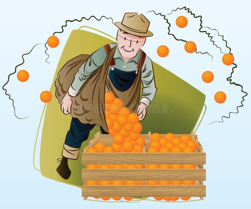 konstruktionsillustrationmateriel under vektor plockning En man samlar apelsiner vektor illustrationer