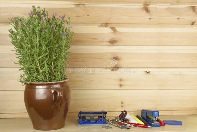 Kontorshyllahäftapparat och en blomkruka med lavendel arkivbild