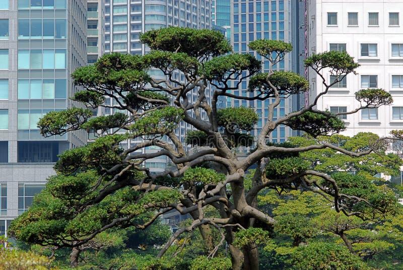 Kontrast między drzewem i budynkami zdjęcie stock