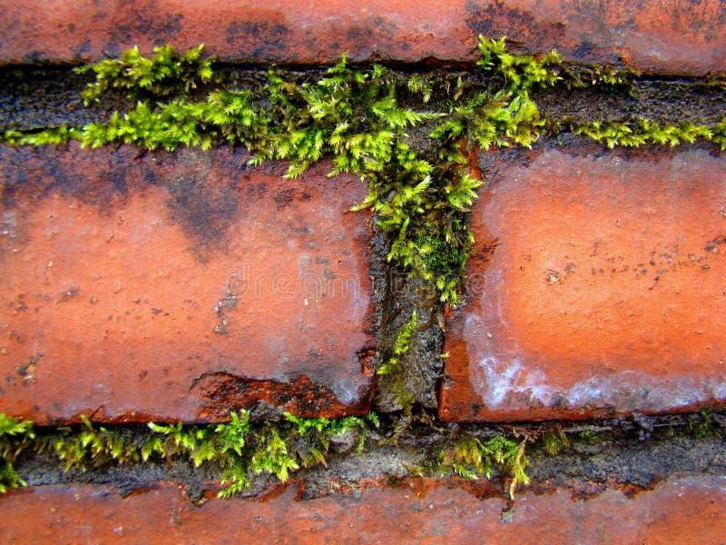 Kontrast von Grünpflanzen und von roten Backsteinen stockbild