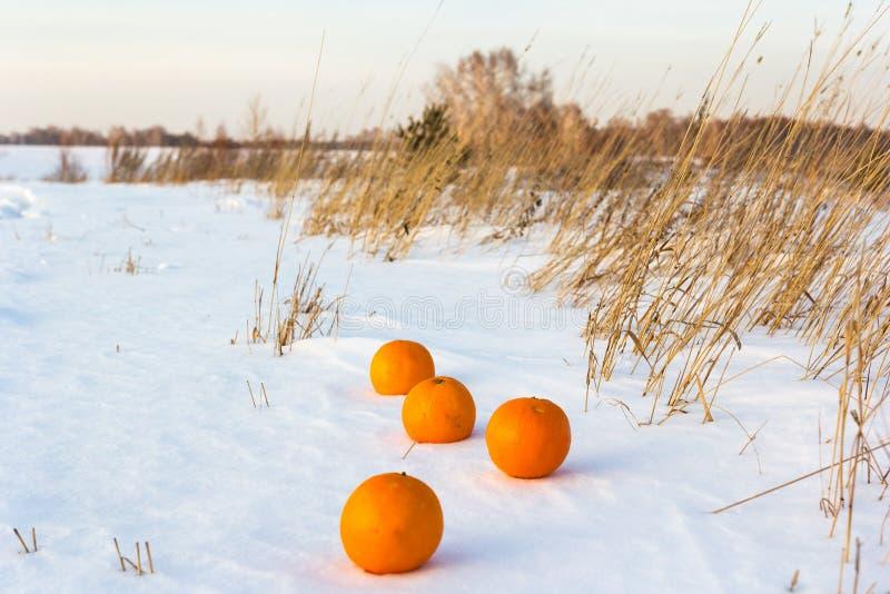 Kontrast von warmen Früchten von Orangen und von Schnee, warm und kalt stockfotografie
