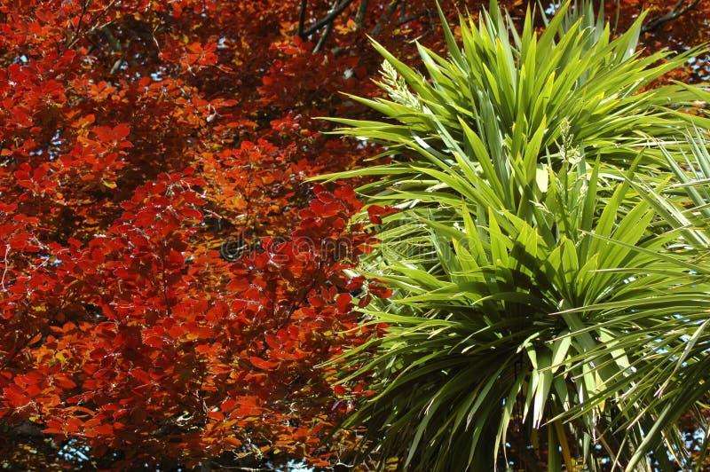 Download Kontrast wiosna zdjęcie stock. Obraz złożonej z drzewo - 130576