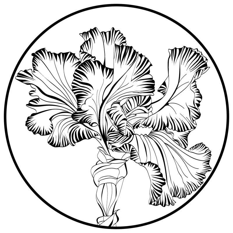 Kontrasta round druk z irysowym kwiatu wizerunkiem w czerni wykłada na białym tle ilustracji