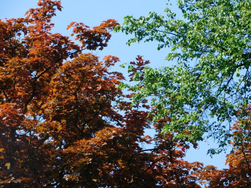 Kontrastieren Sie Bäume im Park am sonnigen Tag stockbilder