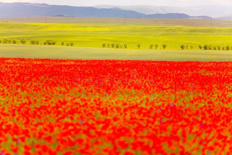 Kontrastkonzept des natürlichen Grüns und der roter Farbe Unscharfer Blumenvordergrund lizenzfreie stockfotos