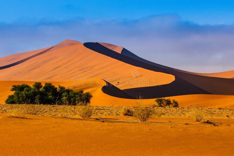Kontrastująca diuna w Popołudniowym słońcu Namibia pustynia, Namibia fotografia royalty free