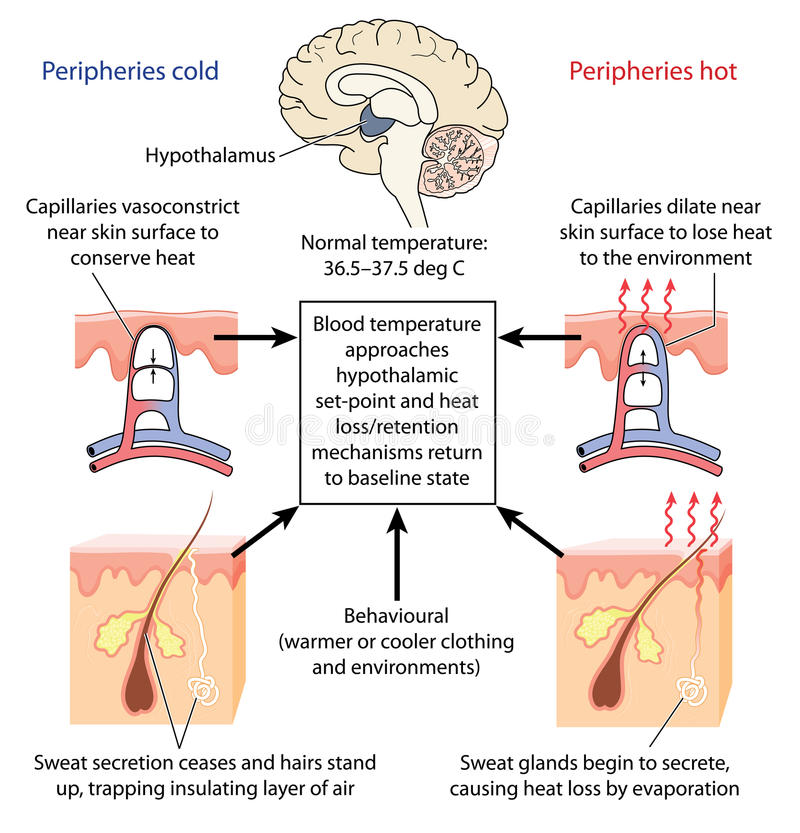 Kontrola ciało temperatura royalty ilustracja