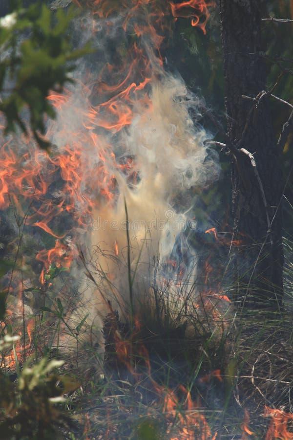 Kontrollierte Brand-Fotos stockfotos